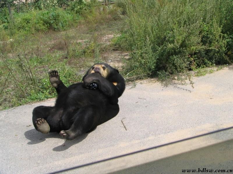 八达岭野生动物园>