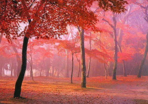 风景区沿杂谷脑河谷两岸密林中的枫树,槭树,桦树,鹅掌松,落叶松等渐次