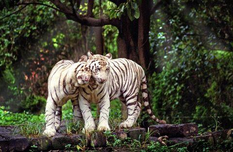 长隆香江动物世界-岭南印象园2日游>亲子合家欢