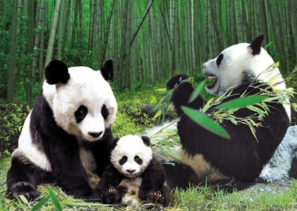 中国竹子博物馆,竹迷宫,参观唯一的华东室外大熊猫馆,山,水,竹林融为