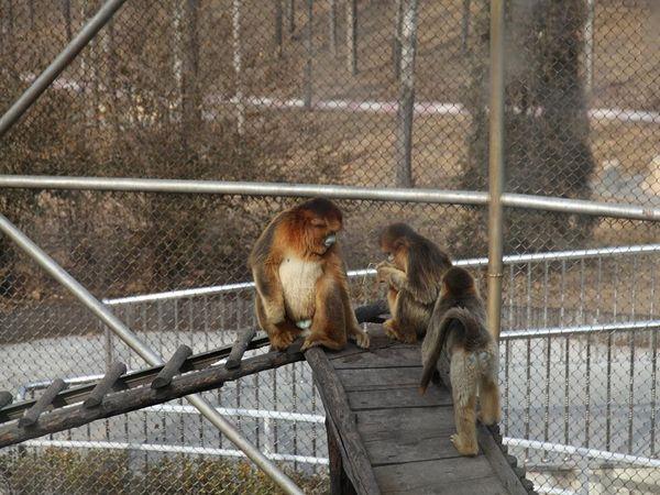 [五一] 大兴野生动物园汽车1日游>亲近自然,感受生灵