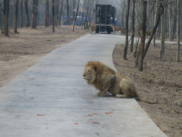 [五一] 大兴野生动物园汽车1日游>亲近自然