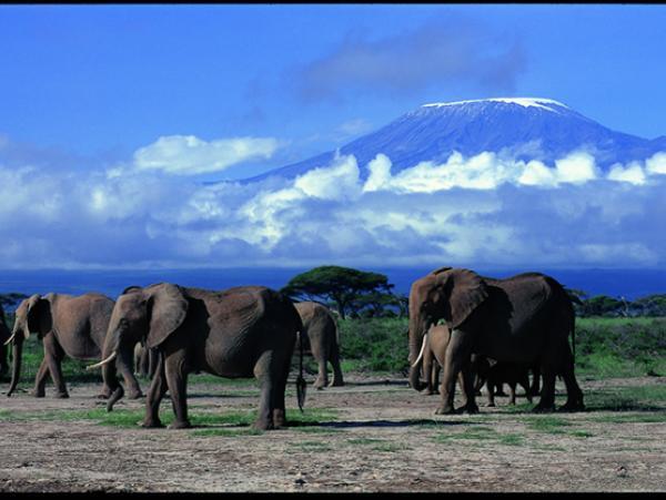 肯尼亚10天游>动物大迁徙,马赛马拉3晚,全程越野吉普