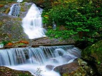 西瀑大森林图片
