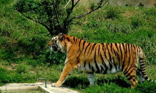 占地面积800亩,由老虎园,狮园,熊园,蛇园等若干个野生动物园组成.