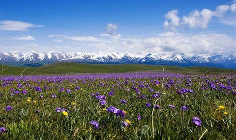后赴中国最大的高山草原——【 巴音布鲁克 】