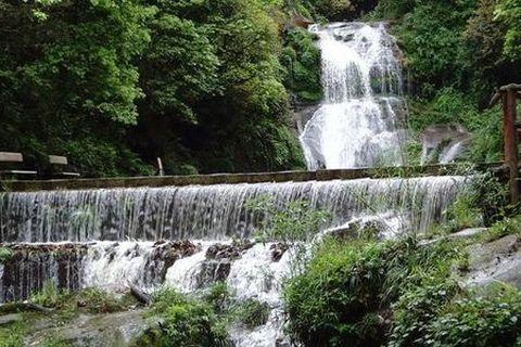 雅安碧峰峡-野生动物园自驾2日游>宿碧峰峡兰林酒店