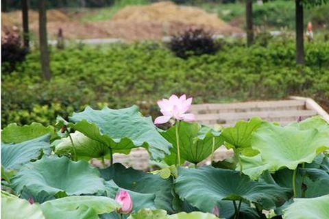 (5)  长隆海洋王国  (3)  国色天香  (3)  长隆野生动物园  (3)